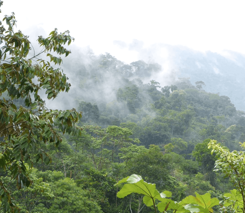 Amazonas Regenwald Fluss