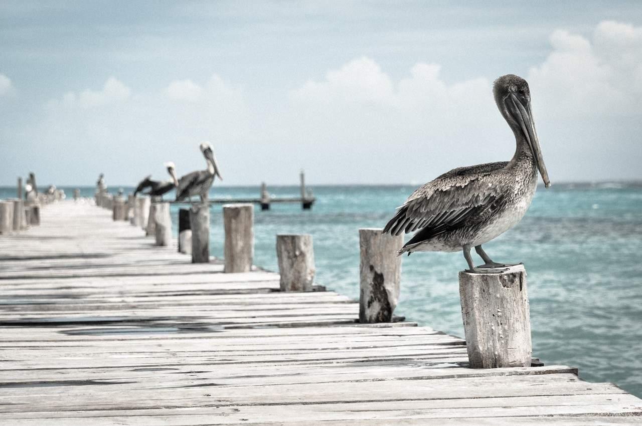 NABU (Naturschutzbund) gegen Plastikmüll im Meer