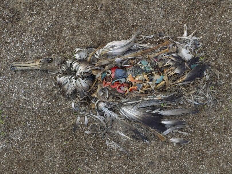 Plastikmüll tötet Tiere im Meer und an Land