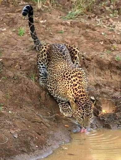 Sri Lanka Yala Nationalpark - Reise-Erfahrungen