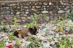 Plastikmüll in der Umwelt und im Meer (Asien)