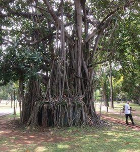 Reise Erfahrung auf Sri Lanka - Zwischen Plastikmüll und Tourismus