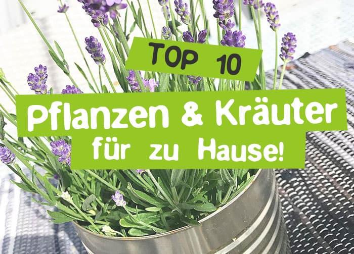 10 gesunde Pflanzen & Kräuter zum selber machen
