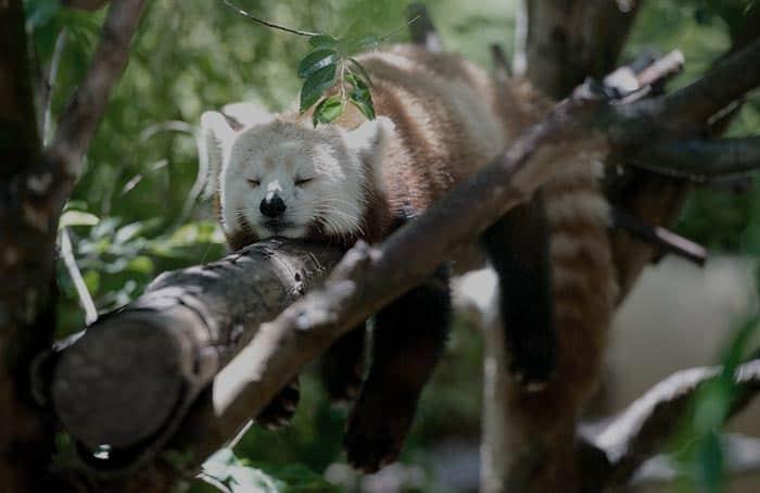 Besser Einschlafen - Schlafstörungen stoppen - Was tun?