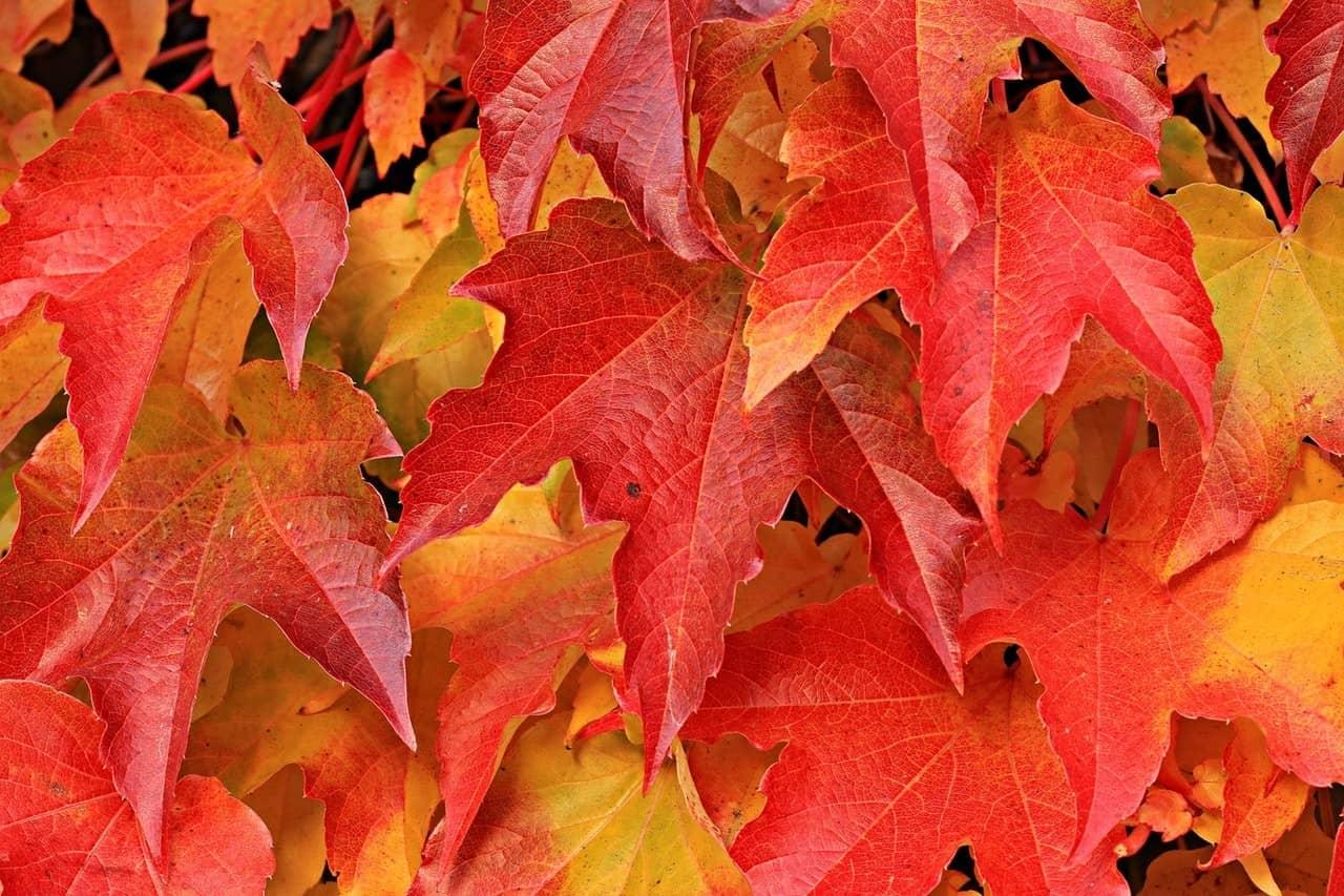 Deo selber machen aus Ahorn Blättern