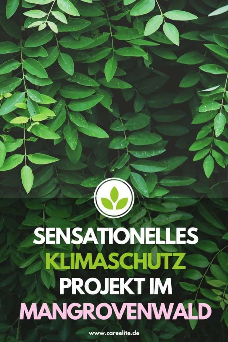 Klimaschutz Projekt Mangrovenwald