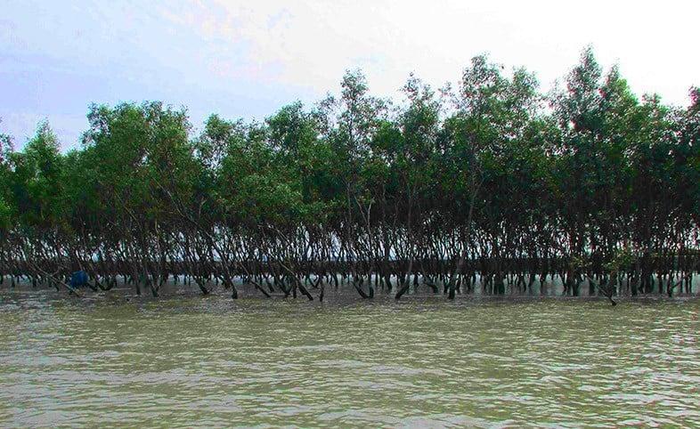 Mangrovenwald und Imkerei - Das Klimaschutz-Projekt in den Sunderbans Indiens