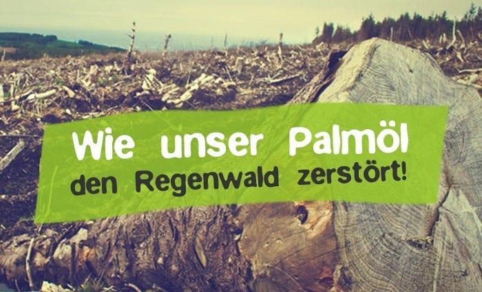 Wie Palmöl Regenwald zerstört - Was ist Palmöl?