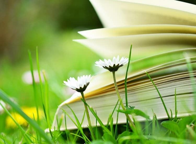 Nachhaltigkeit Buch - Bücher über Nachhaltigkeit lesen kaufen