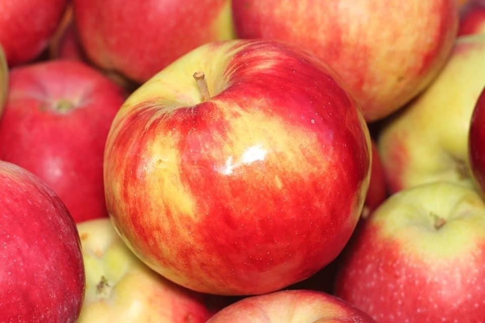 Obst - Lebensmittel länger haltbar machen - Haltbarkeit verlängern