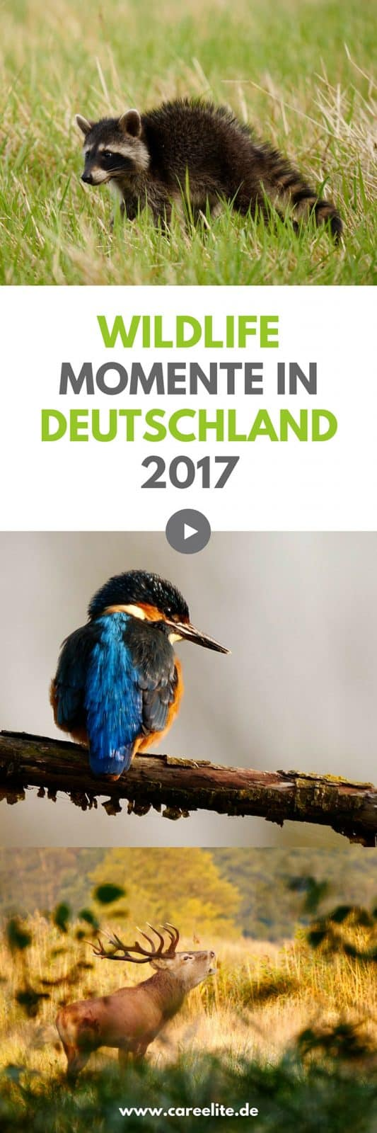 Wildlife Deutschland 2017 im Video