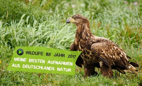 Mein Jahr 2017 in Deutschlands wilder Natur