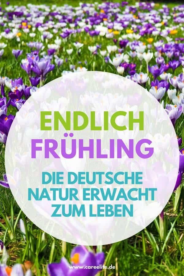 Frühjahr Tierwelt in Deutschland