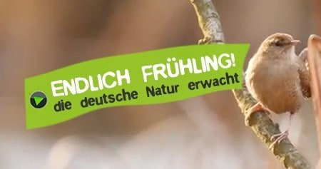 Frühling in Deutschlands wilder Natur