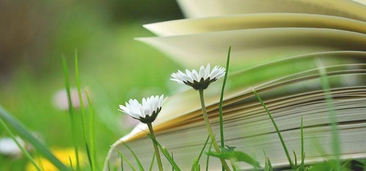 Papierverbrauch reduzieren - Bücher tauschen und leihen
