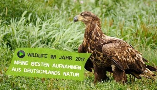 Wilde Natur 2017 Aufnahmen Wildlife
