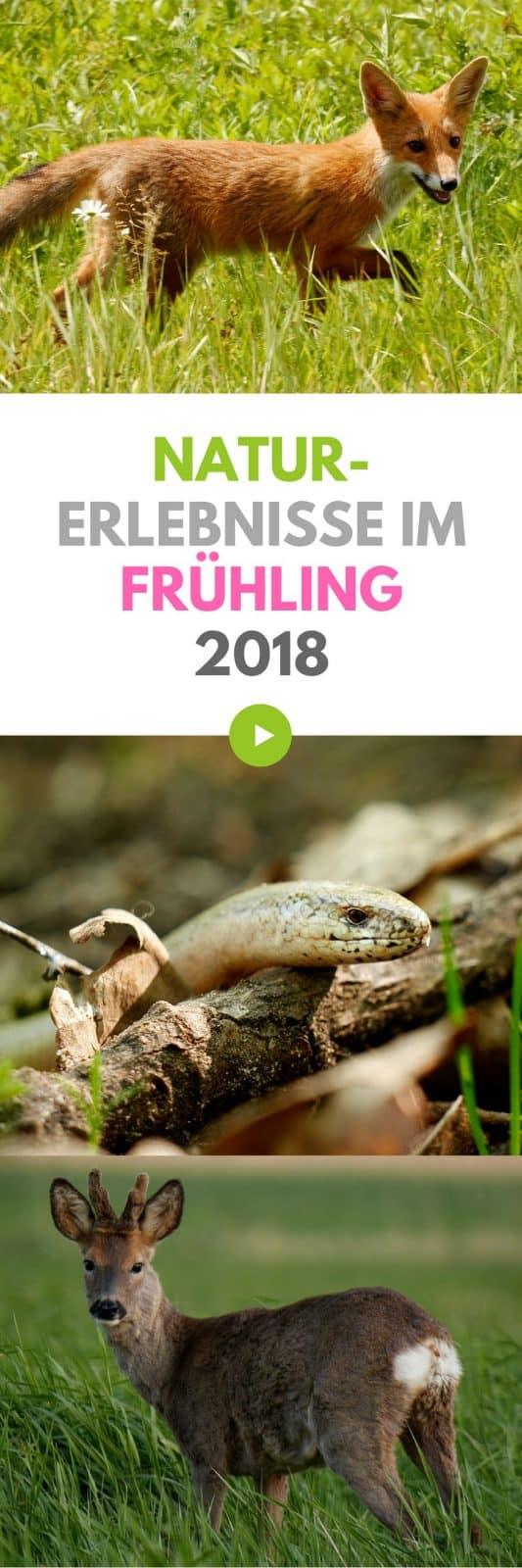 Wildlife Frühling in Deutschland 2018