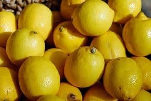 Zitronen Duschgel selber machen