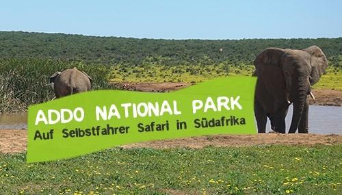 Selbstfahrer Safari im Addo National Park in Südafrika