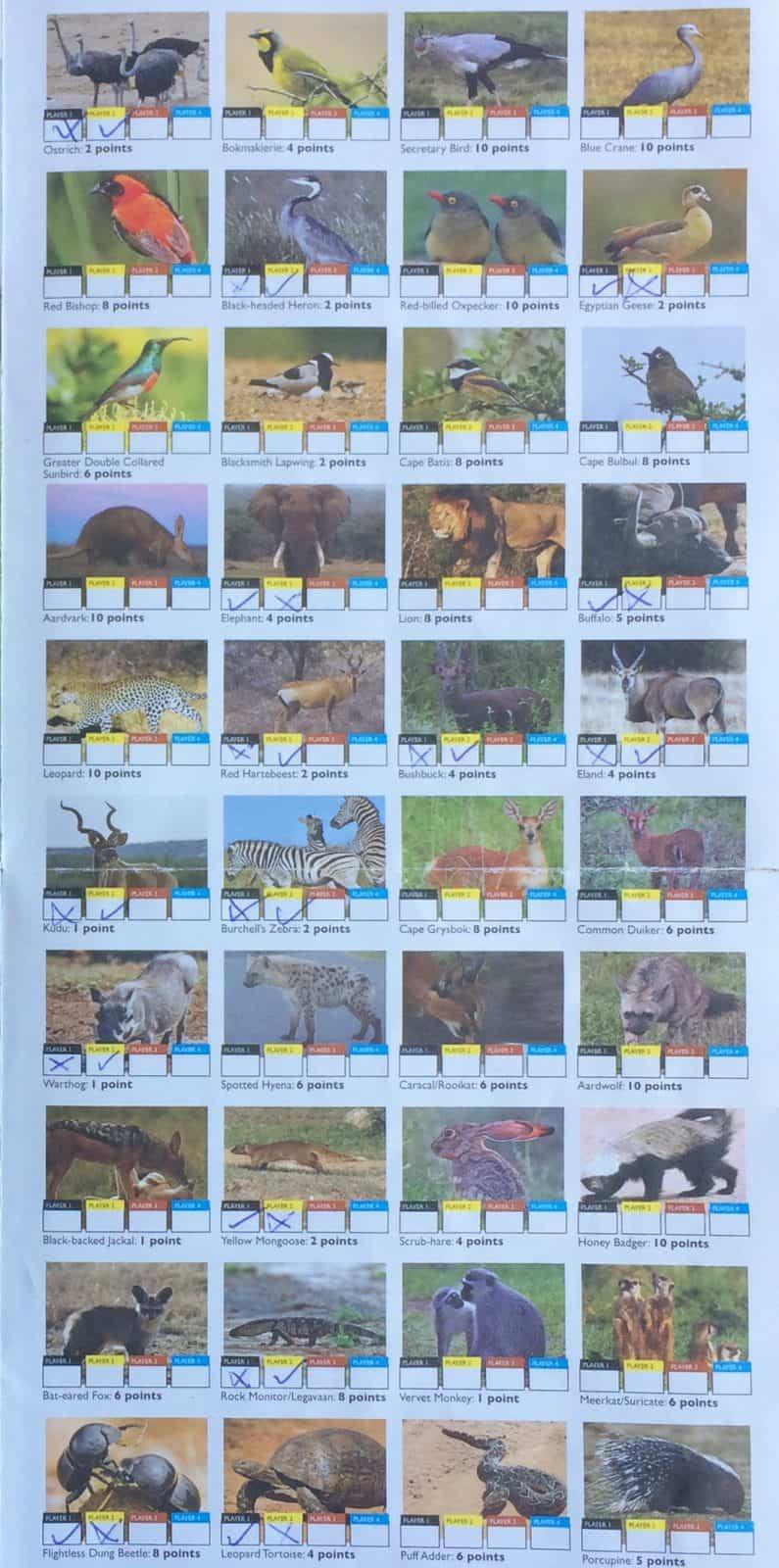 Addo Elephant National Park Tiere Animals Selbstfahrer Safari