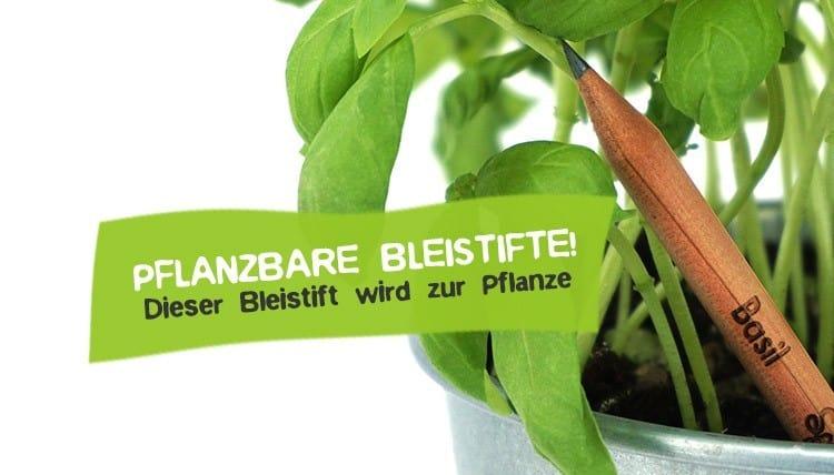 Pflanzbarer Bleistift Pflanze Stift wird zum Baum
