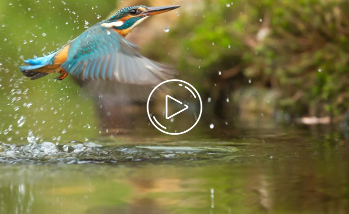 Habitat of the kingfisher