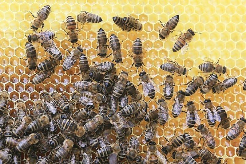 Bienenwachstücher selber machen - Tücher aus Bienenwachs