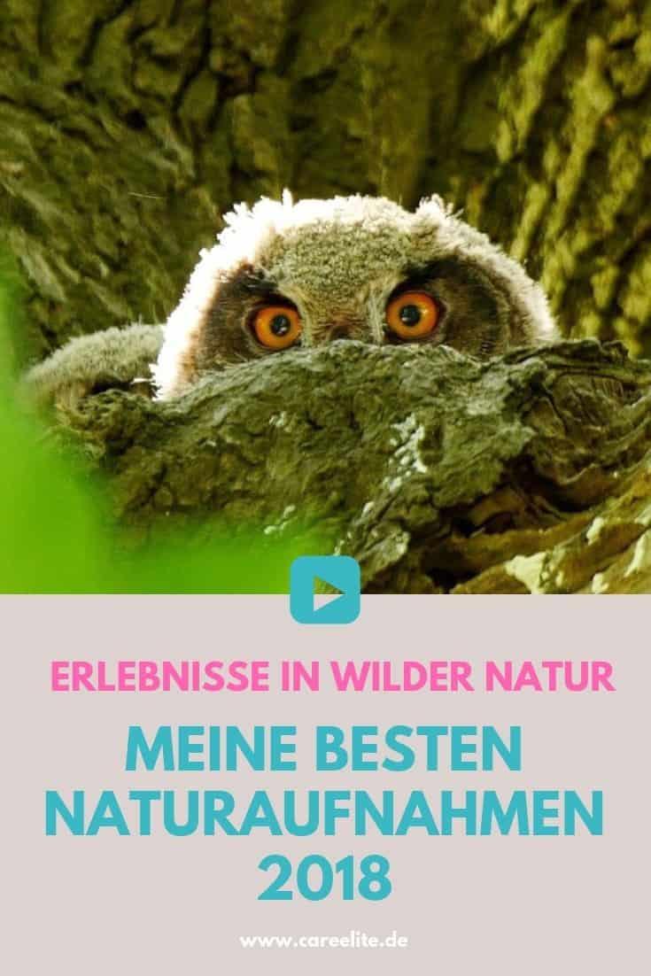 Naturaufnahmen in Deutschlands wilder Natur