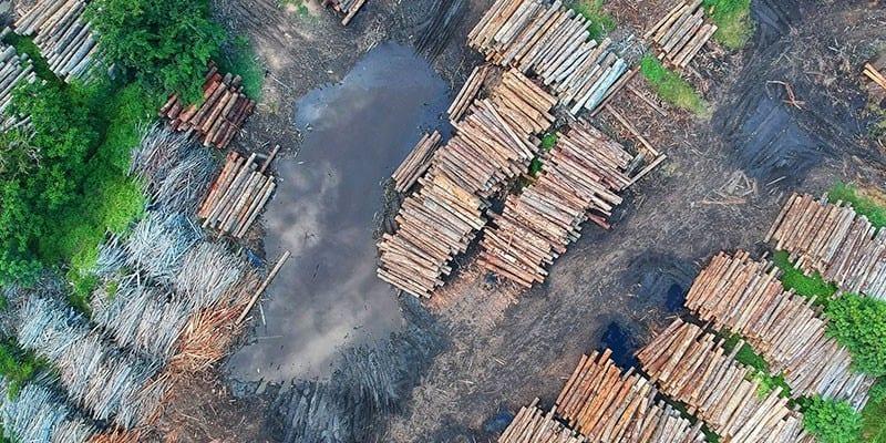 Umweltprobleme unserer Zeit- Ursachen und Lösungen - Abholzung