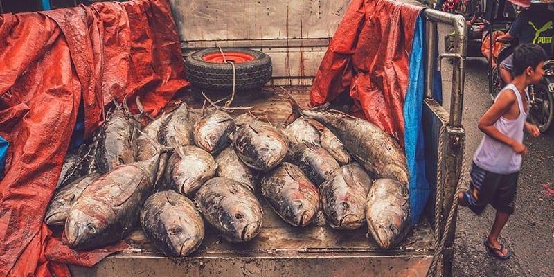Umweltprobleme unserer Zeit- Ursachen und Lösungen - Überfischung