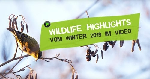 Naturerlebnisse Wildlife Winter 2019 in Deutschland
