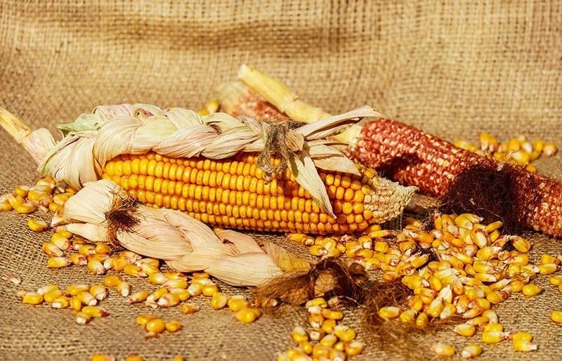 Maisstärke - Plastik Alternative aus der Forschung