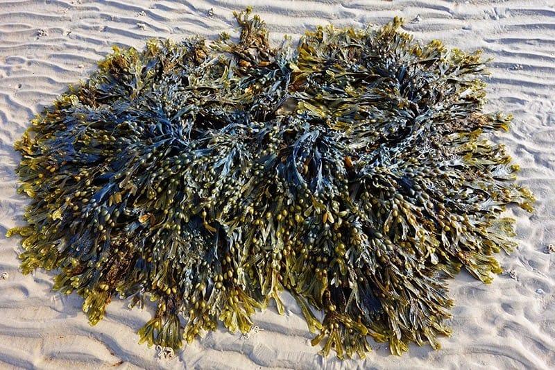 Algen - Plastik Alternative aus der Forschung