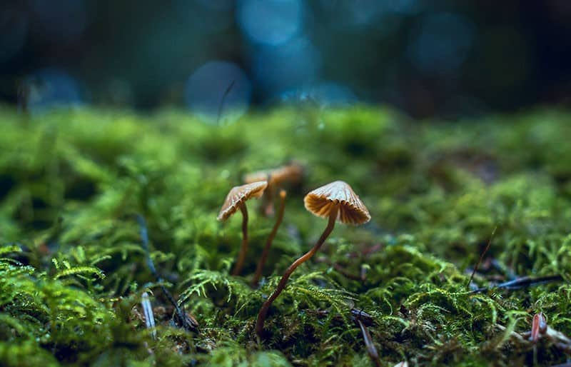 Pilze - Plastik Alternative aus der Forschung