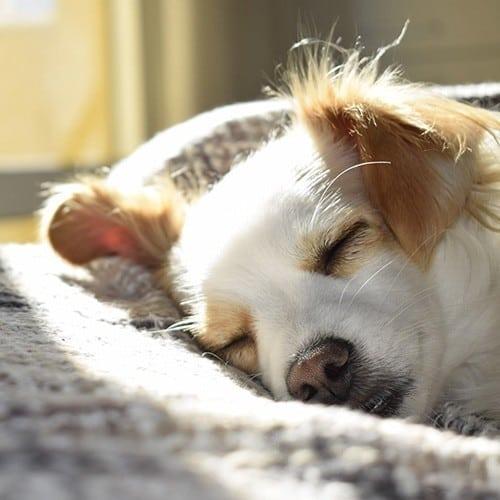 Perfekt Schlafen Schlaftraining Online Kurs