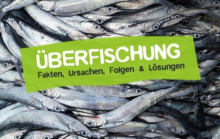 Überfischung - Definition, Ursachen, Folgen, Lösungen