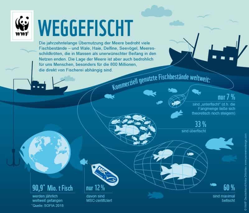 Überfischung der Meere - Zahlen, Fakten, Statistiken