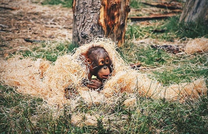 Abholzung der Wälder Folgen Umweltproblem