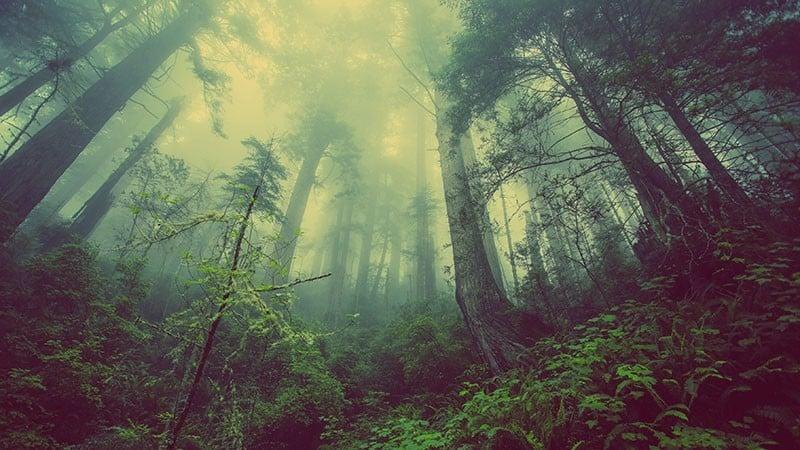 Abholzung von Wäldern als Umweltproblem