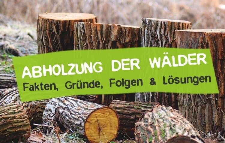 Abholzung der Wälder - Gründe, Folgen & Lösungen