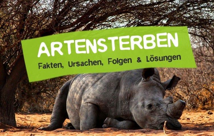 Artensterben stoppen und Artenvielfalt retten
