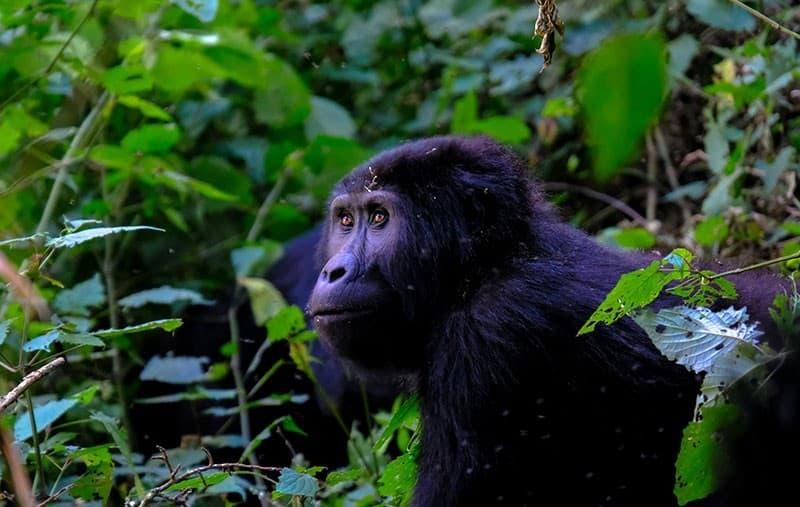 Artensterben - Definition und Lösungen