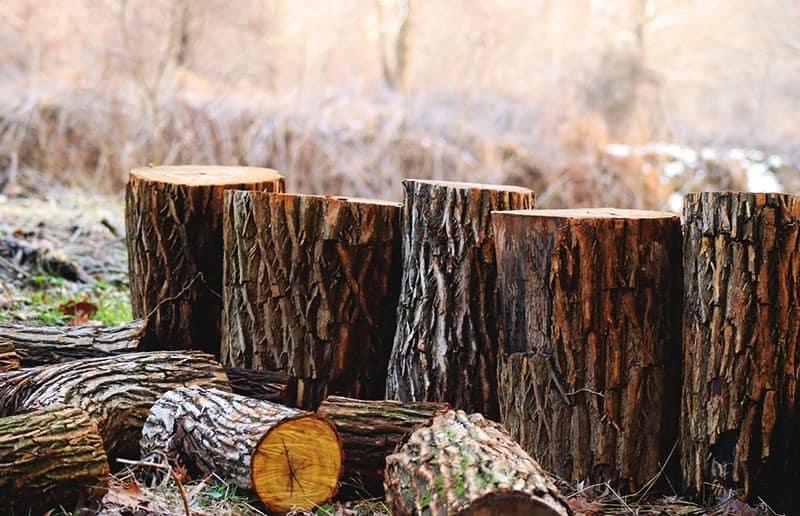 Abholzung der Wälder weltweit Fakten Statistiken
