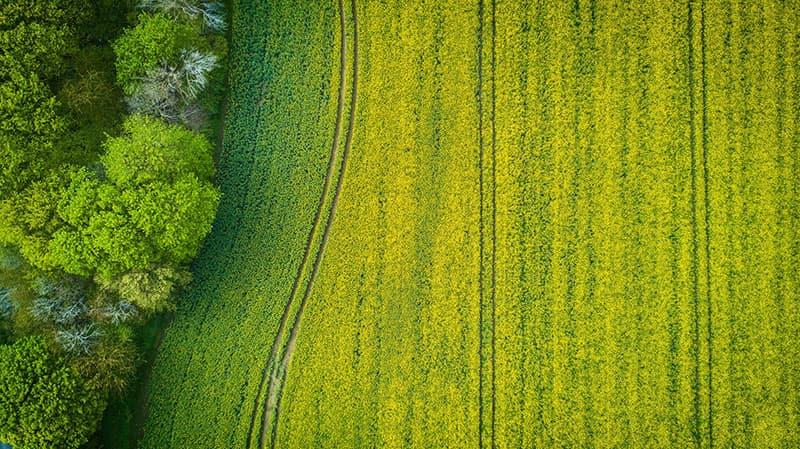 Bodenerosion - Was tun gegen den Bodenabtrag?