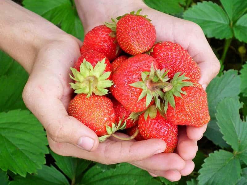 Nachhaltiges Gärtnern mit Gemüsegarten