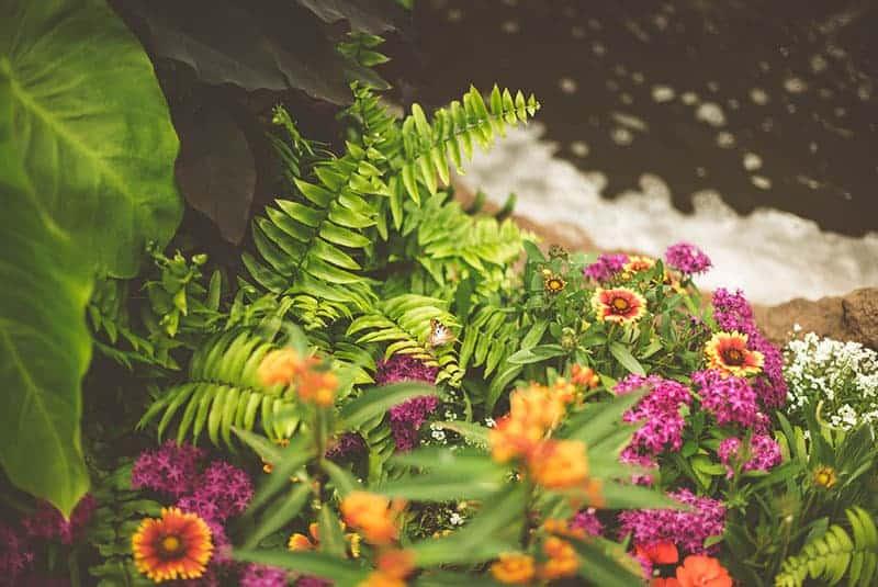 Nachhaltig gärtnern - Tipps & Tricks