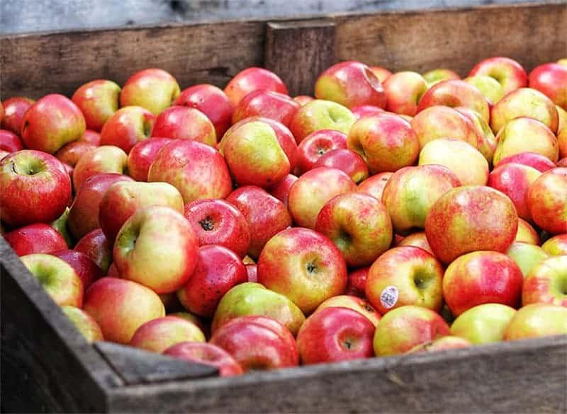 Äpfel saisonal einkaufen