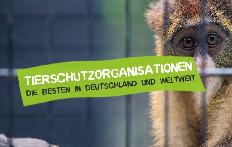 Die besten Tierschutzorganisationen im Vergleich