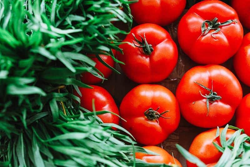 Fakten und Statistiken über Vegetarismus