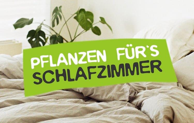 Schlafzimmer Pflanzen für gesunden Schlaf